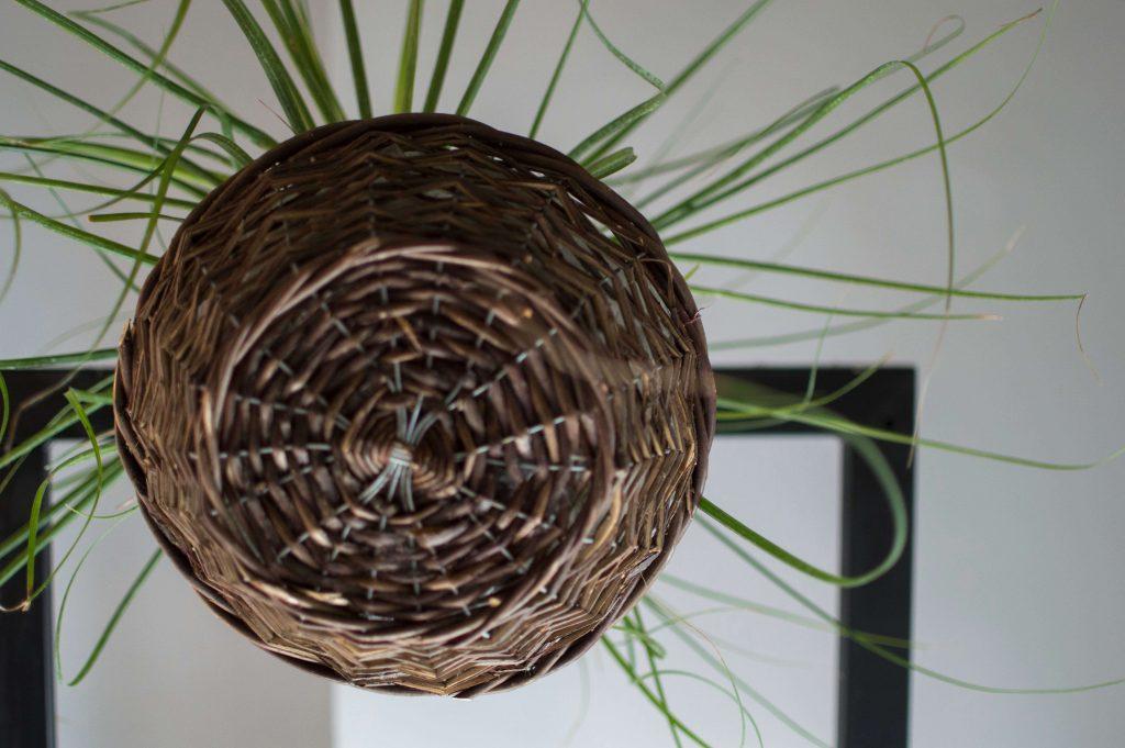 καλάθι με φυτό